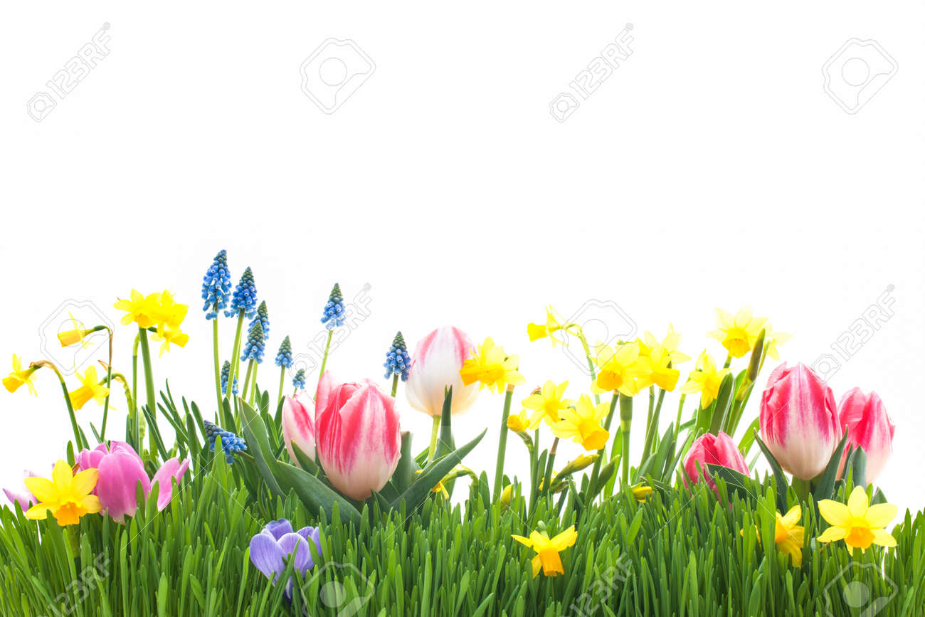 Spring Flowers In Green Grass Isolated On White Background Stock