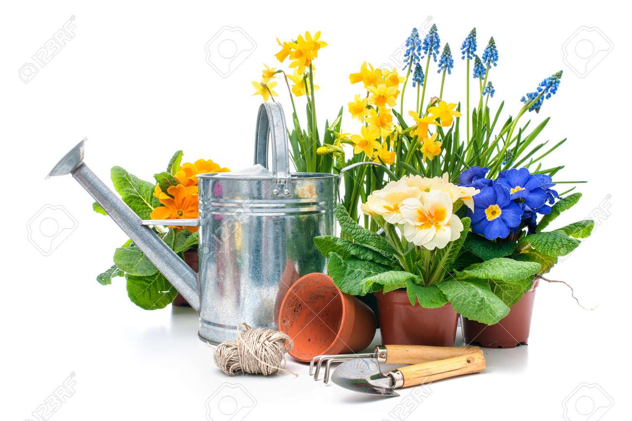 Fleurs De Printemps Avec Des Outils De Jardinage Isolé Sur Fond ...
