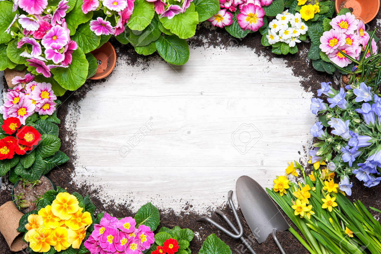 planting flowers spring images u0026 stock pictures royalty free