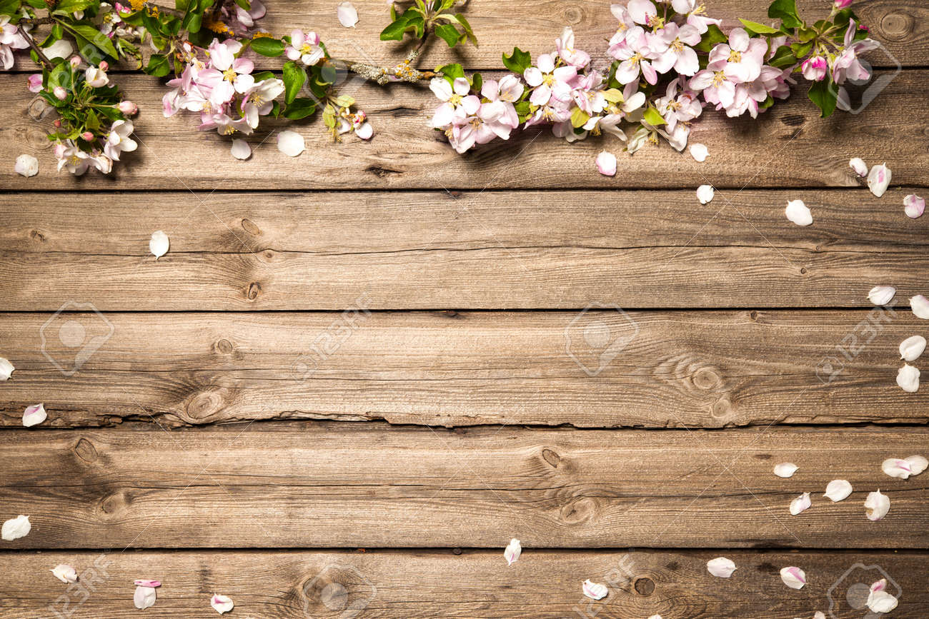 Spring flowering branch on wooden background. Apple blossoms Stock Photo - 50199455