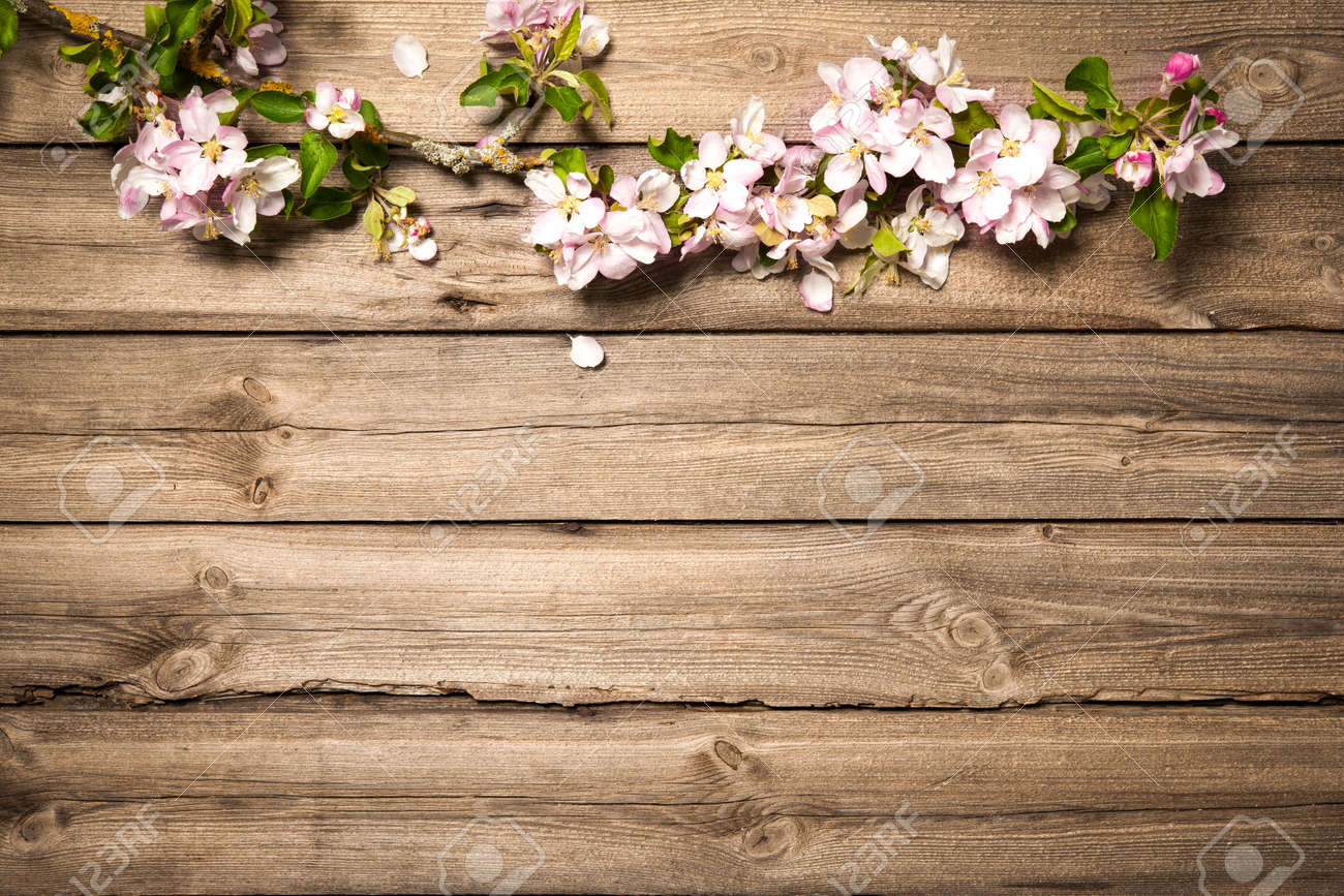 Spring Flowering Branch On Wooden Background Apple Blossoms Stock