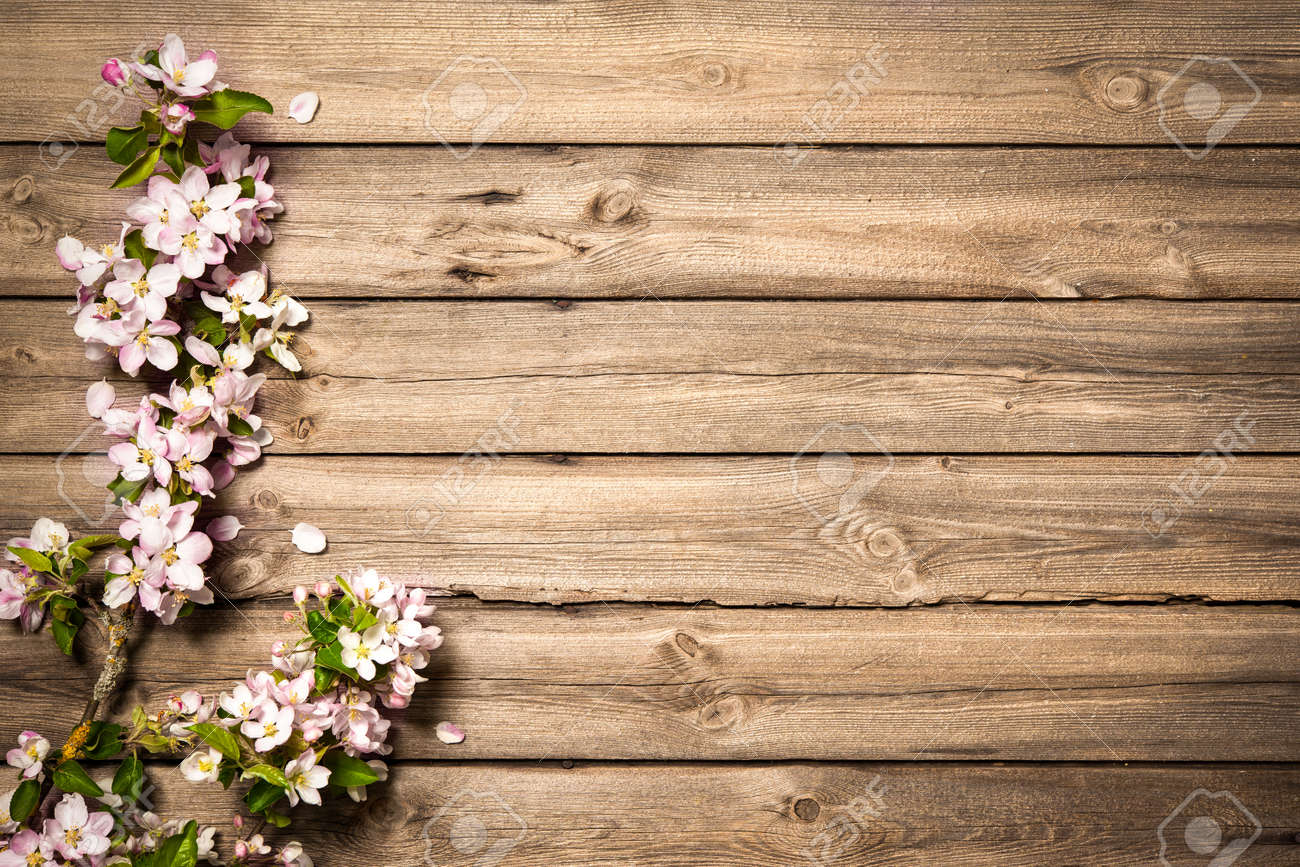 Spring flowering branch on wooden background. Apple blossoms - 50199467