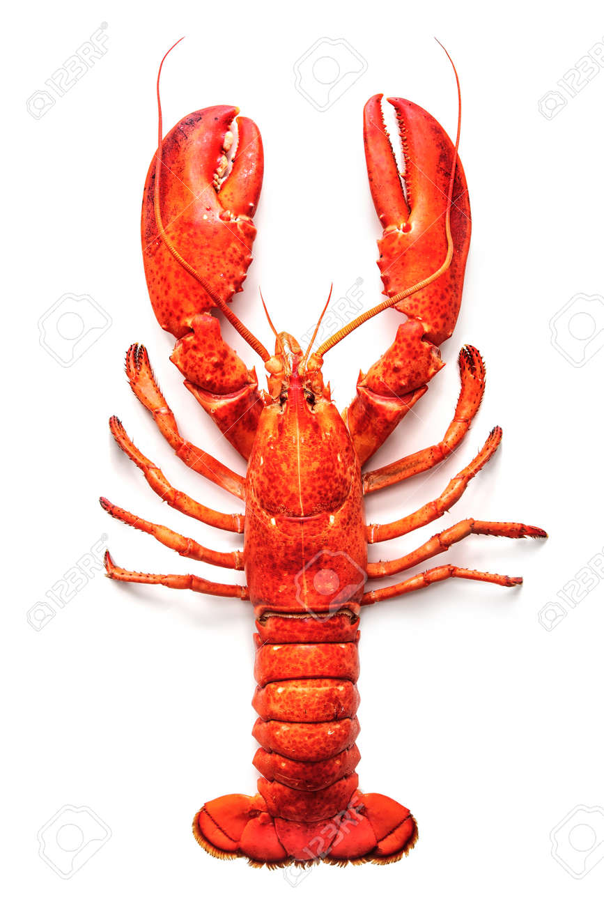Cooked lobster isolated on a white background - 55844685