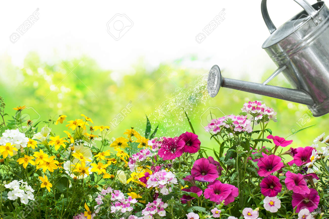 Watering Flowers With A Watering Can In The Garden Stock Photo ...