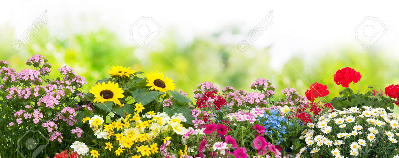 background with the summer flowers in garden stock photo picture