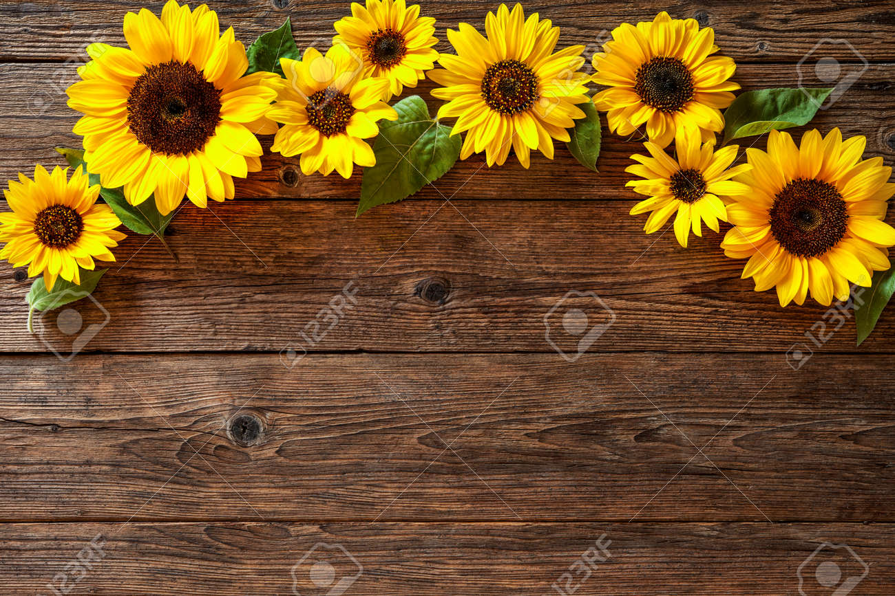 Autumn Background With Sunflowers On Wooden Board Stock Photo