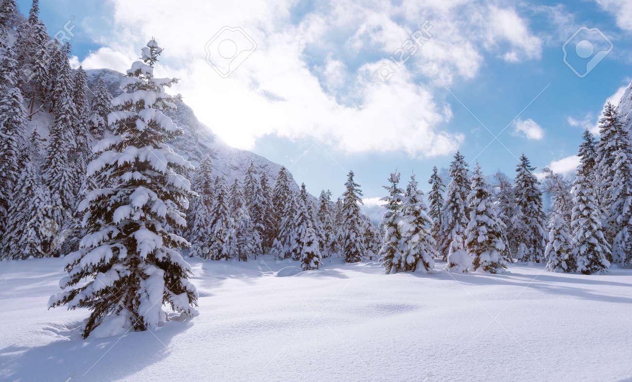 Les Sapins Sous La Neige La Forêt De Montagne En Hiver Paysage De Noël