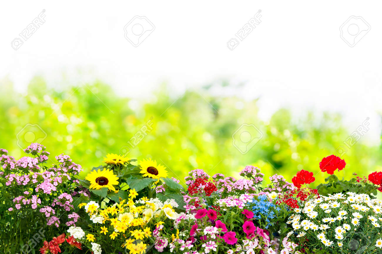 Background with the summer flowers in garden - 73220490