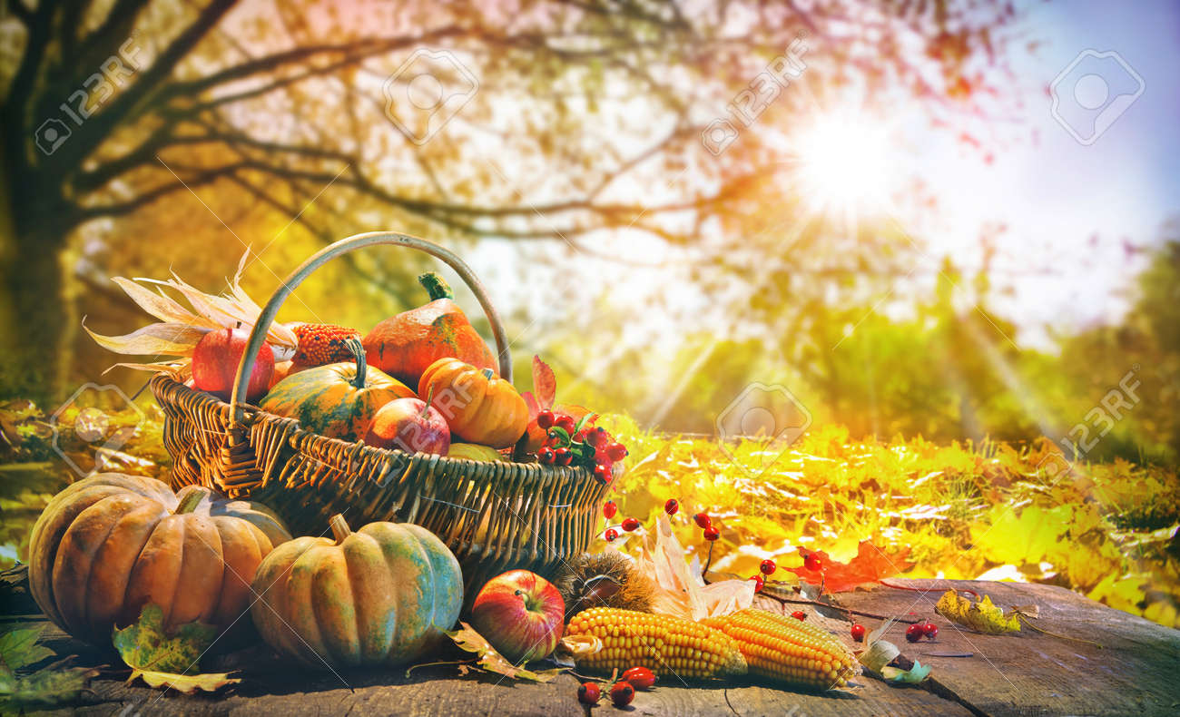 Thanksgiving pumpkins and falling leaves on rustic wooden plank in autumn garden - 86540786