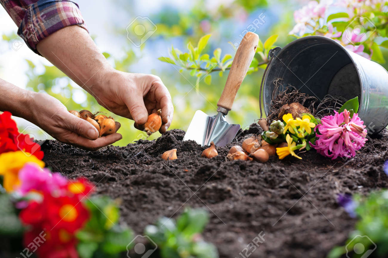 Planting spring flowers in sunny garden - 119161634