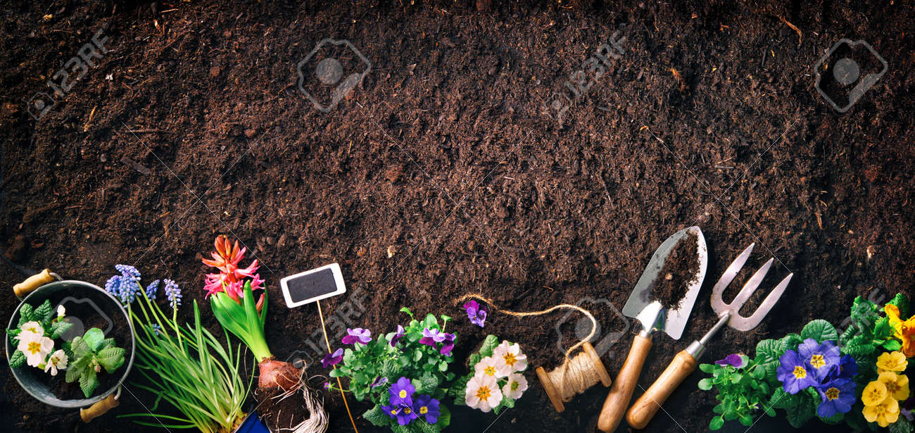 Planting spring flowers in the garden. Gardening tools and flowers on soil - 119161660