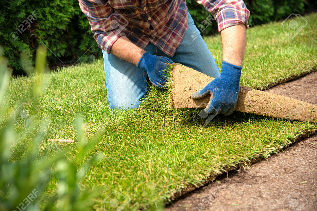 Man laying grass turf rolls for new garden lawn - 127391292