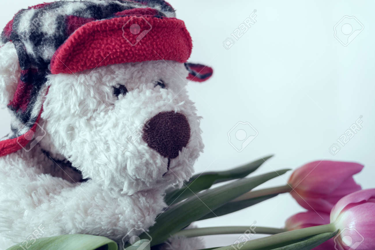 A white Teddy bear in a red hat with crimson tulips. Greeting card concept - 141205673