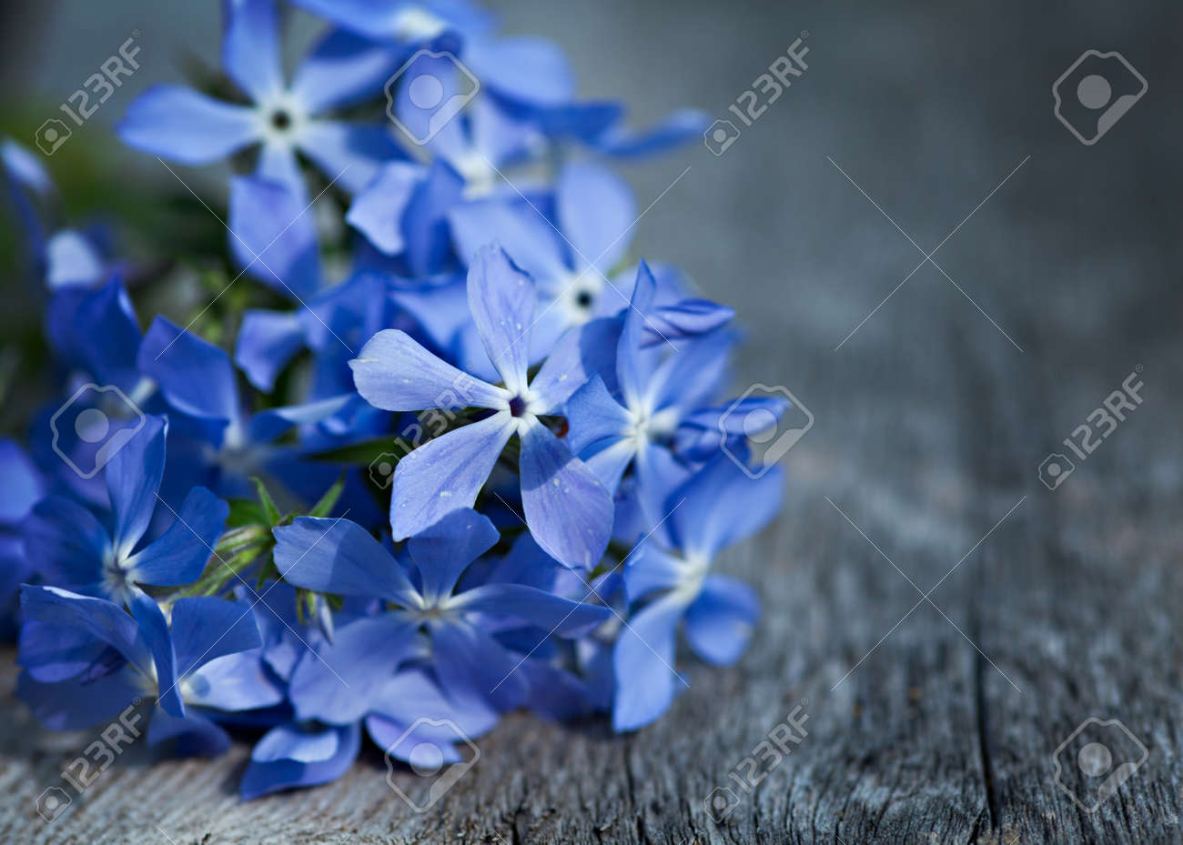Blue spring flowers on wooden table stock photo picture and royalty blue spring flowers on wooden table stock photo 19267972 mightylinksfo