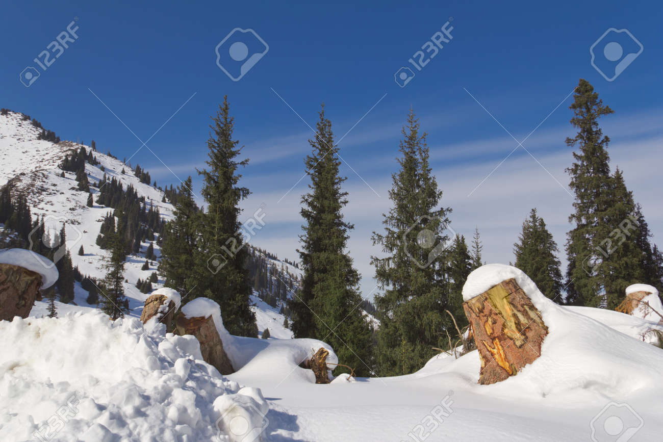 Winter in the mountains Stock Photo - 12886042
