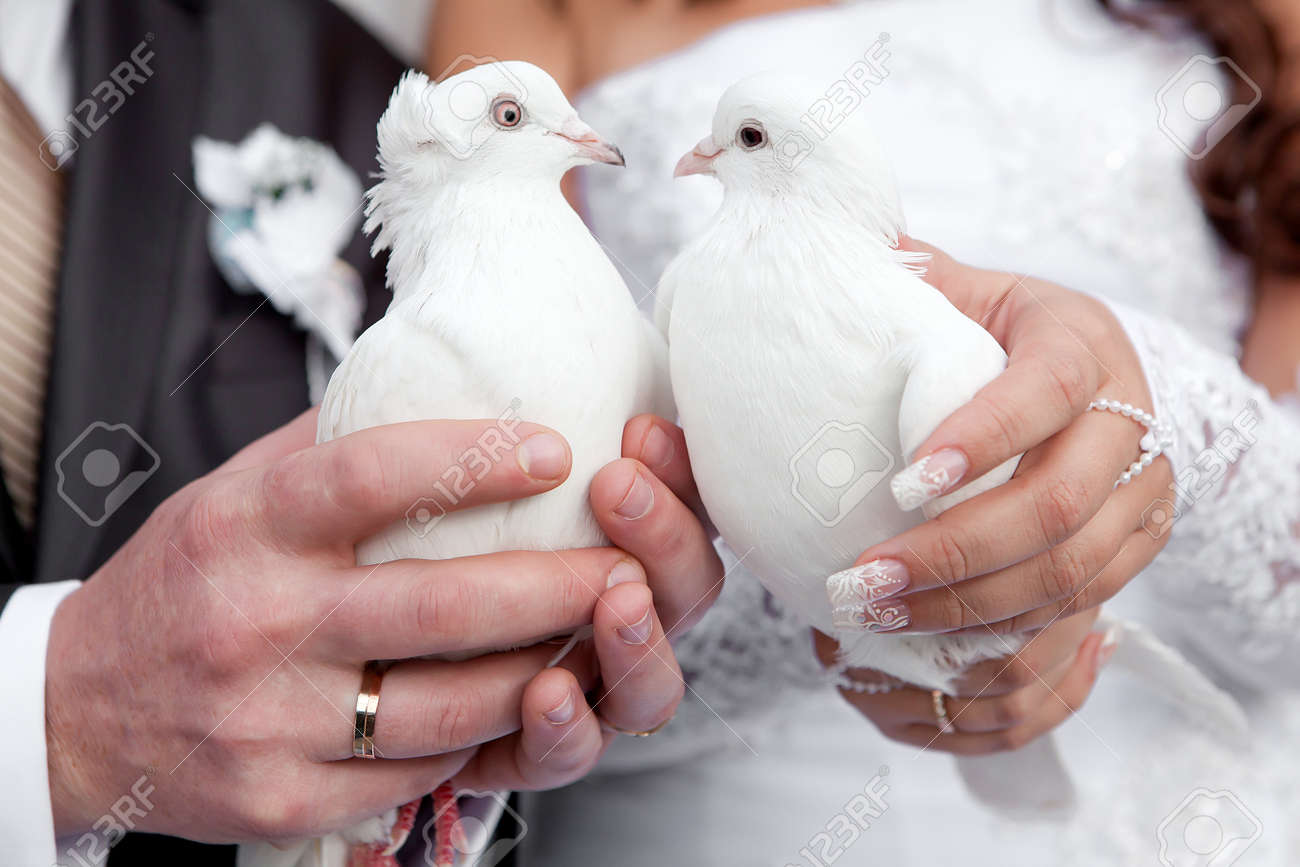 Wedding pigeons in hands of the groom and the bride Stock Photo - 11541776