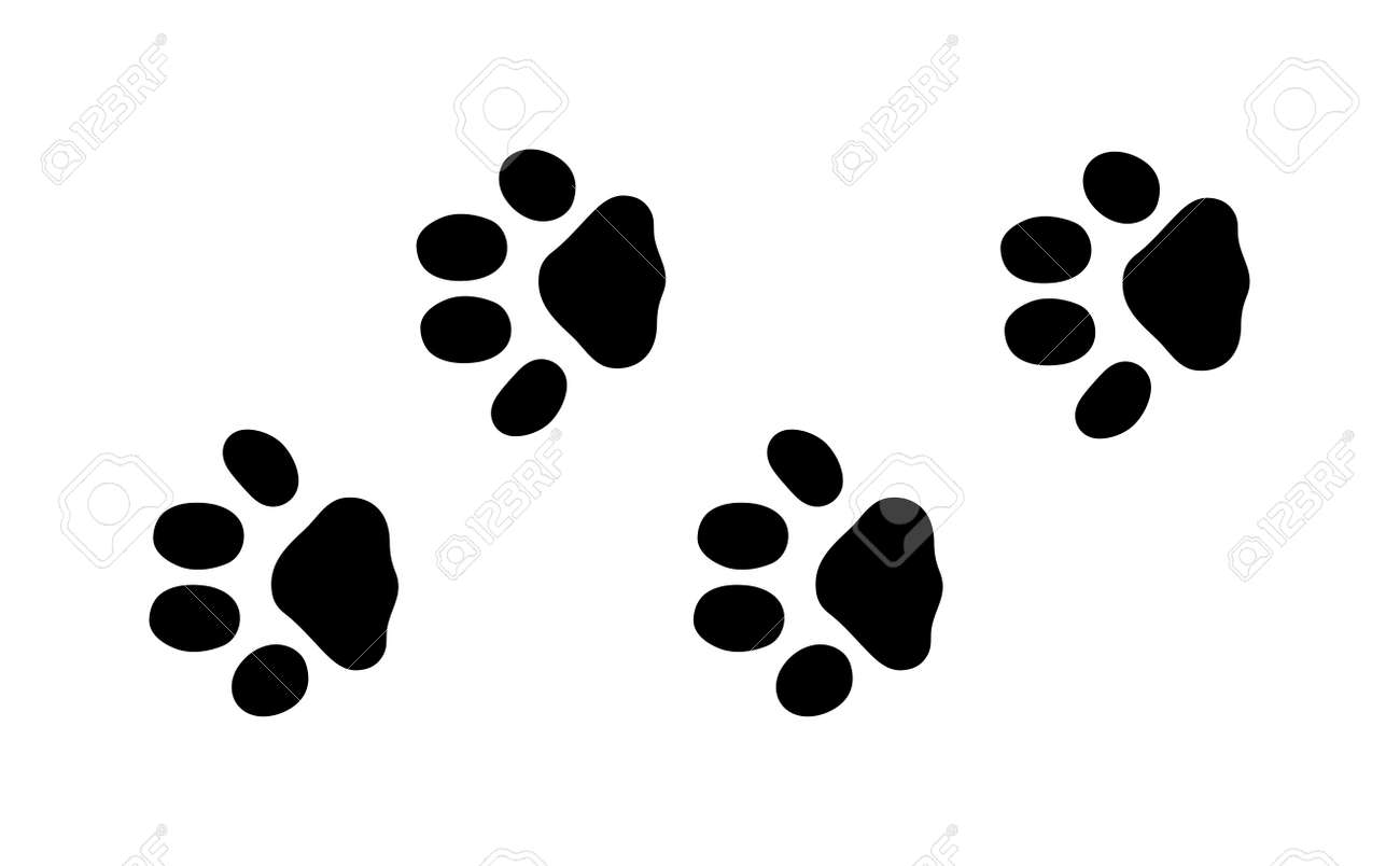 animal black foots and wildlife animal mammal steps pet traces