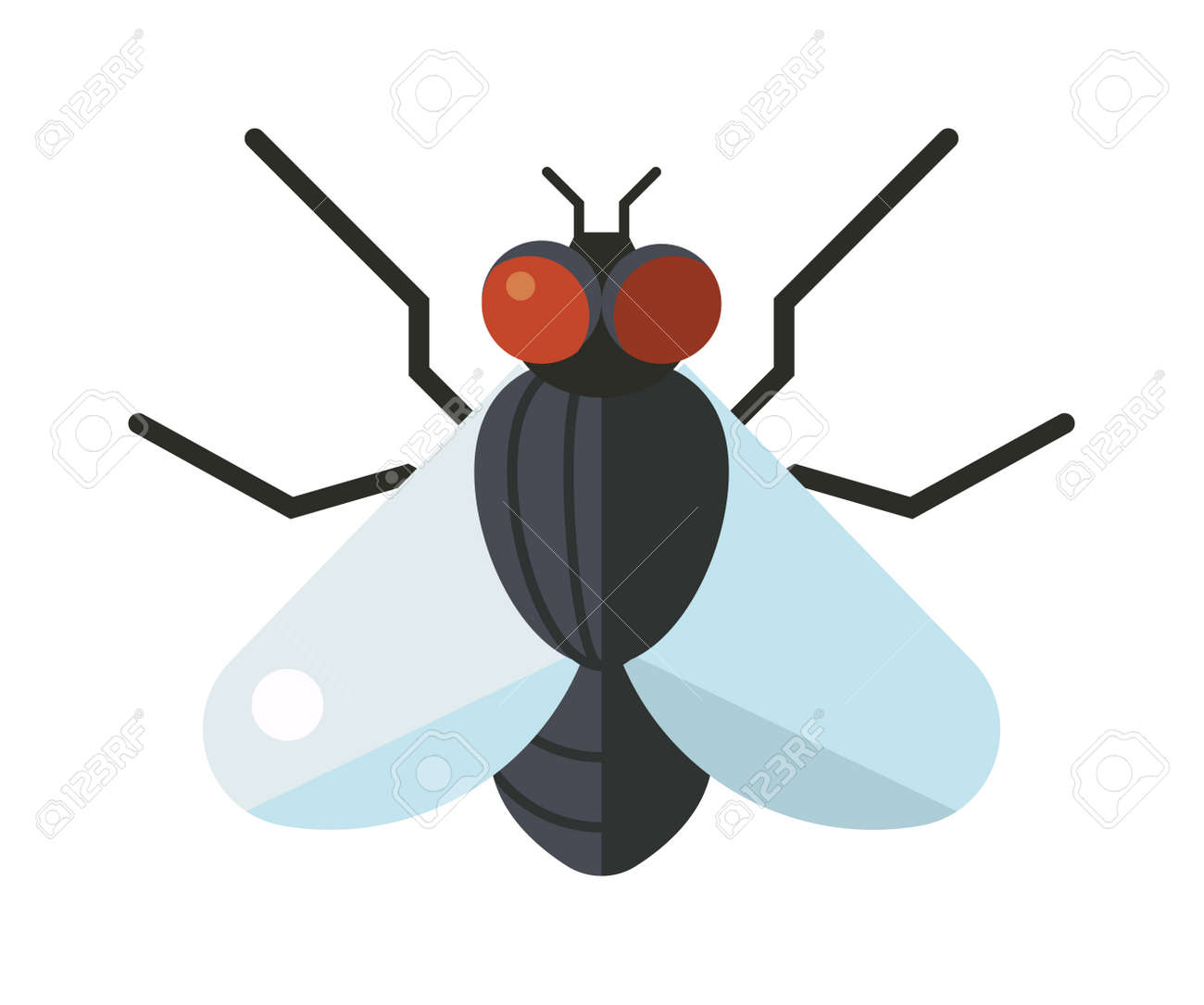 house fly insect and cartoon black fly insect insect hairy legs