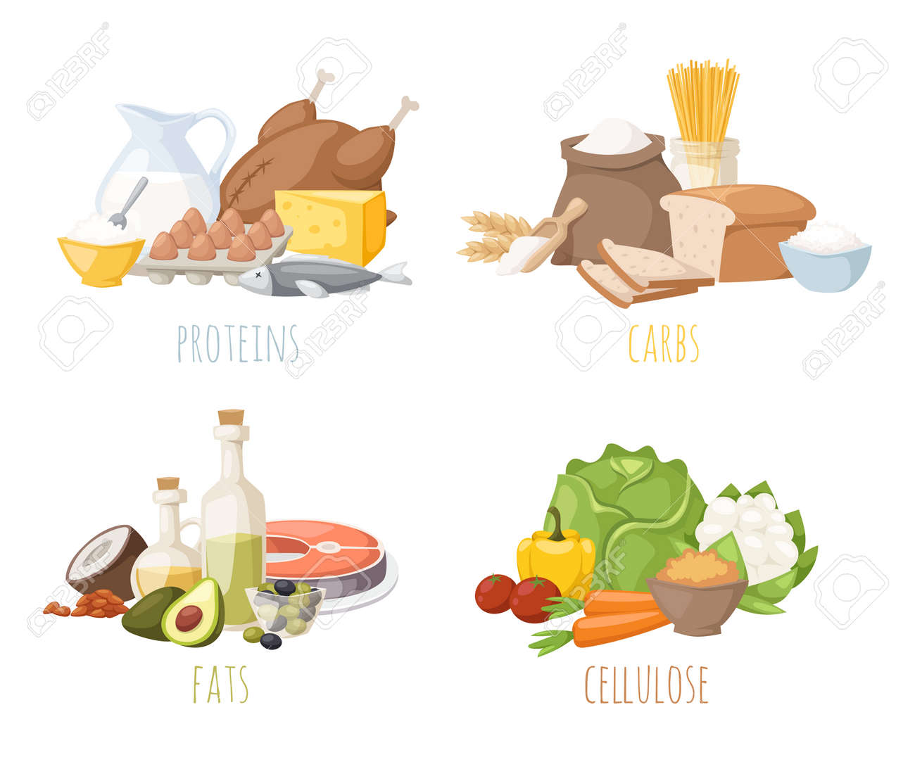 Healthy nutrition, proteins fats carbohydrates balanced diet, cooking, culinary and food concept vector. Healthy nutrition proteins fats carbohydrates vegetables fruits, meat and healthy nutrition. - 54707453