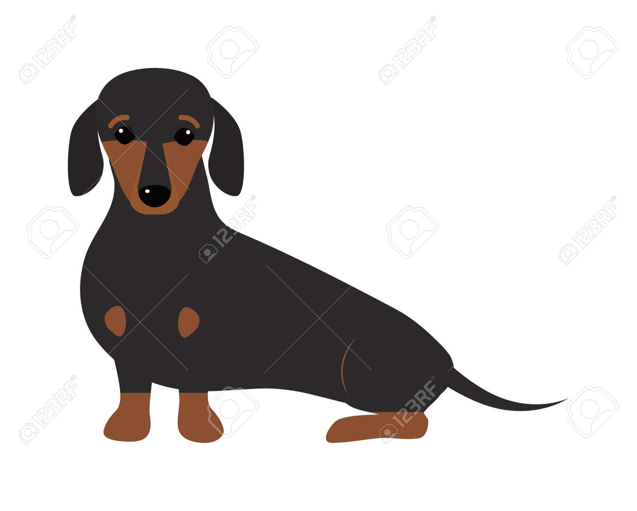 Best Cute Canine Brown Adorable Dog - 55890613-dachshund-dog-playing-purebred-breed-brown-puppy-canine-vector-cute-dachshund-dog-and-little-dachshu  Graphic_364298  .jpg