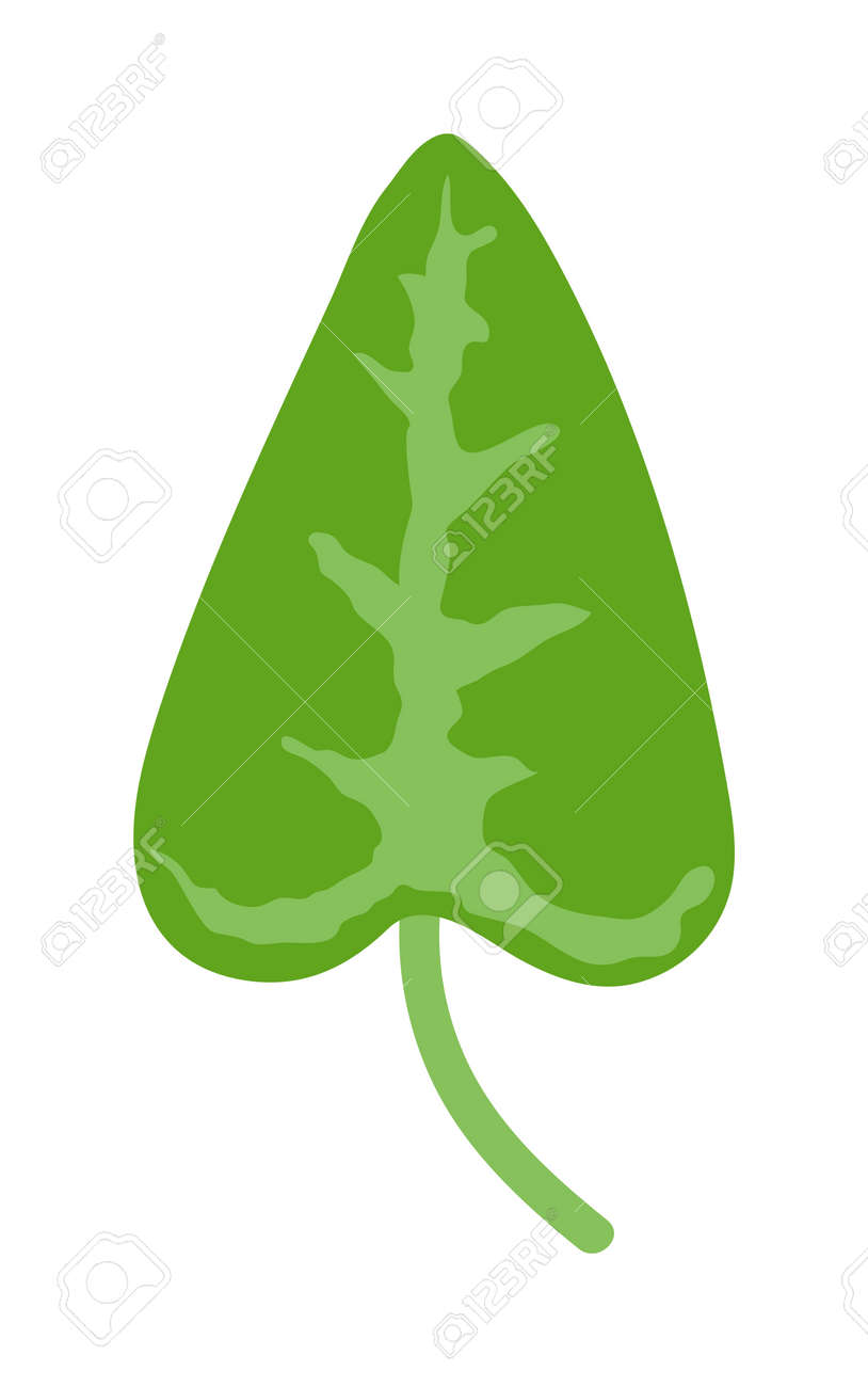 Vector Tropical Leaves Green Tree Leave. Natural Green Leaf Isolated ...