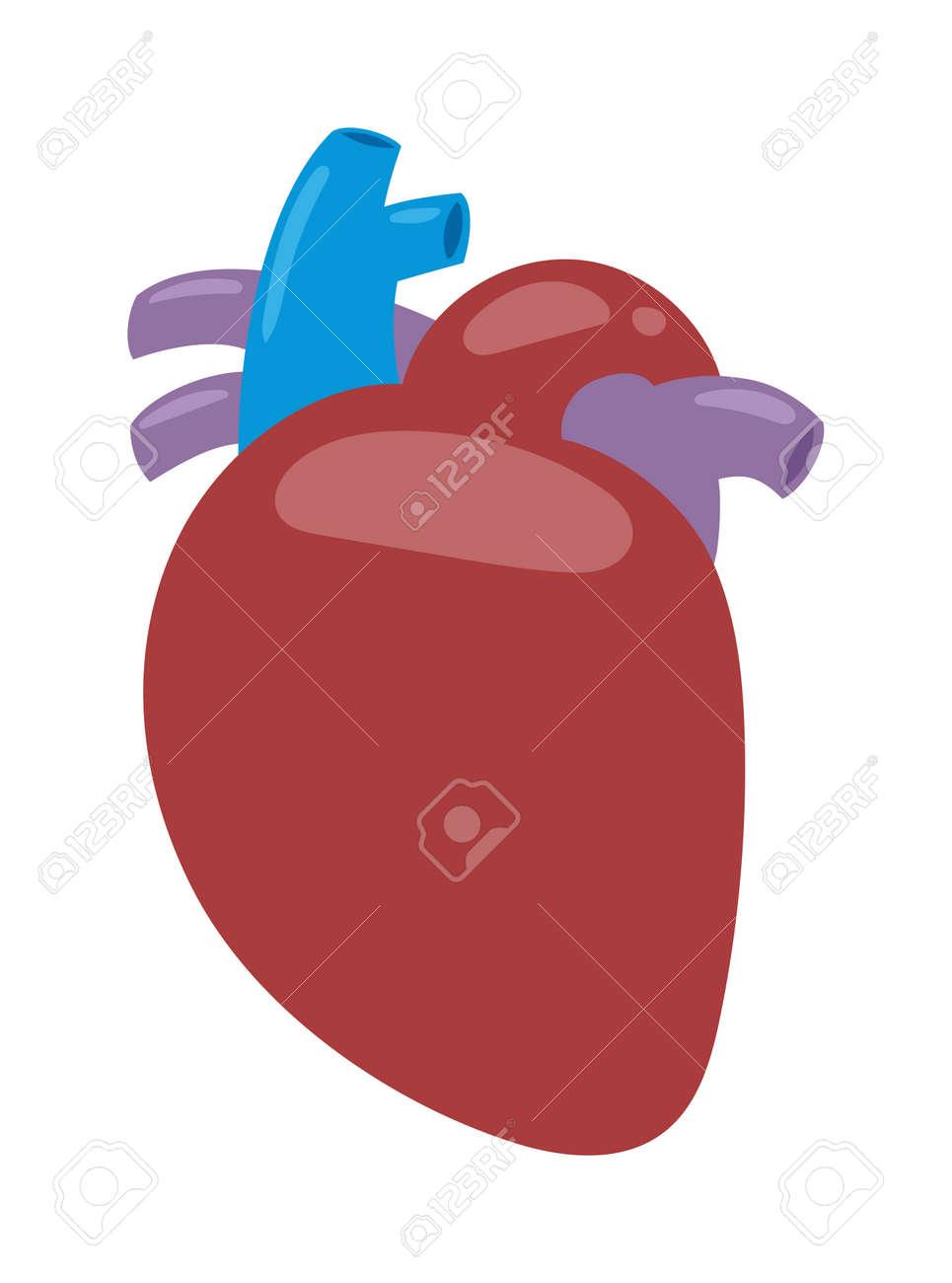 Human Heart Anatomy Isolated On White Vector Illustration. Biology ...