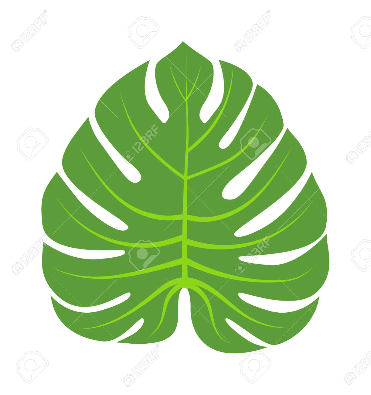 vector tropical leaves green tree leave natural green leaf isolated rh 123rf com vector leaf springs vector leaf border
