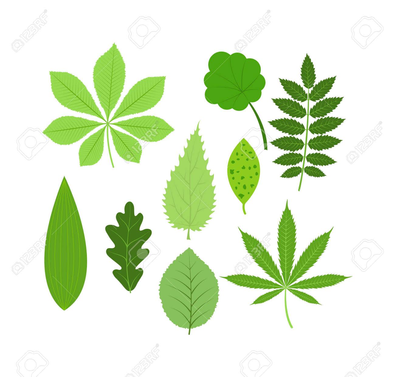 Groß Blätter Färben Blatt Ideen - Beispiel Anschreiben für ...