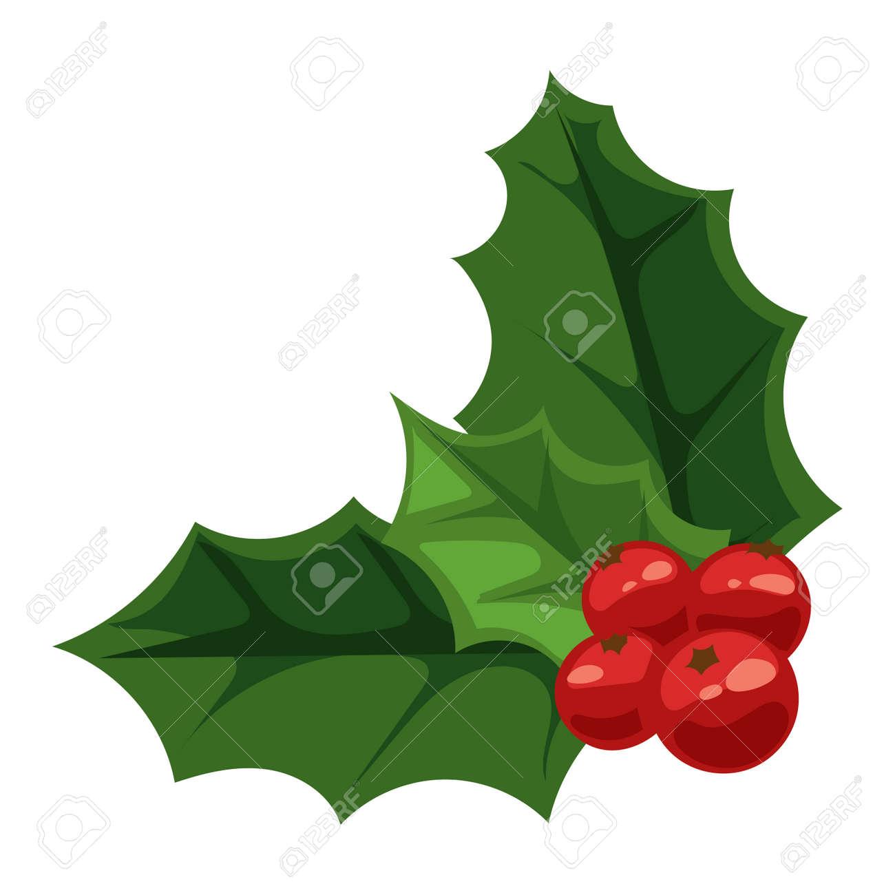 Feuille De Houx berry noël européen des feuilles de houx ilex aquifolium et de