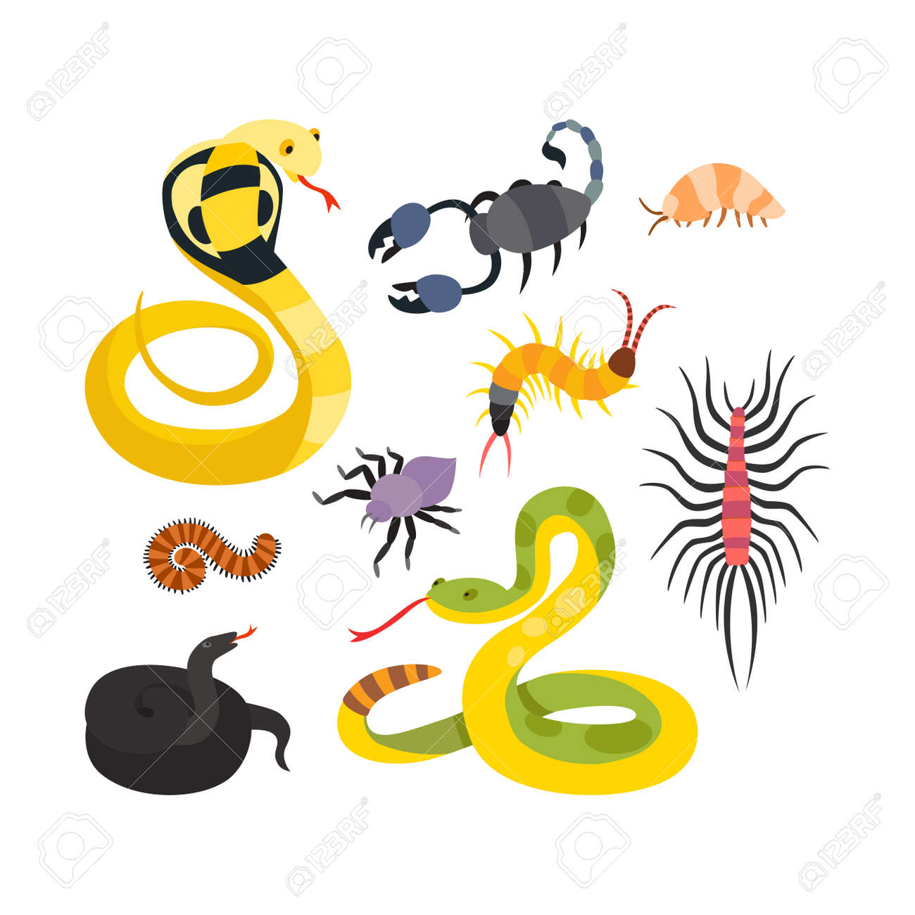 Image of: Africa Stock Photo Vector Flat Snakes And Other Danger Animals 123rfcom Vector Flat Snakes And Other Danger Animals Stock Photo Picture
