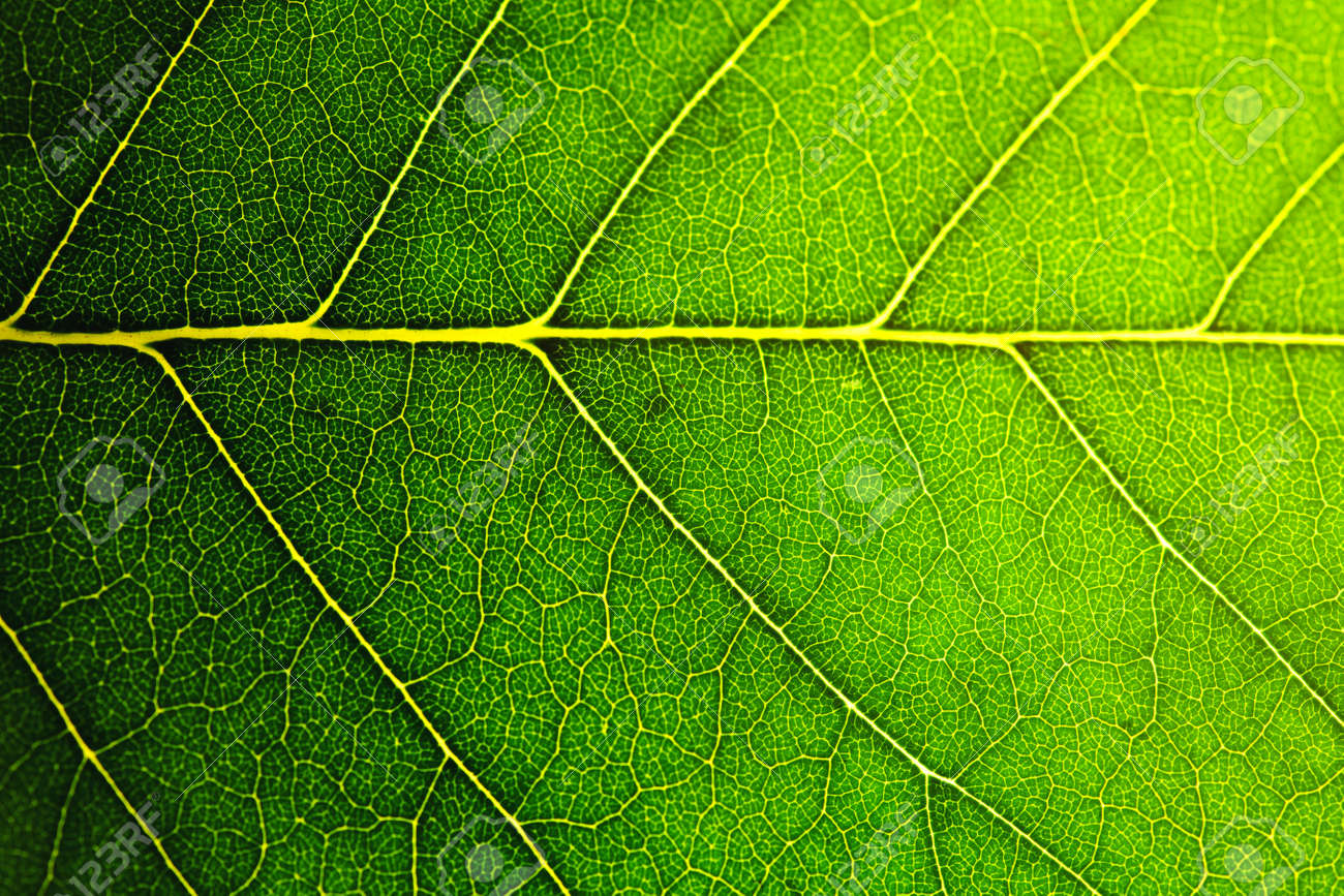 leaf macro shot, shallow DOF - 37215472