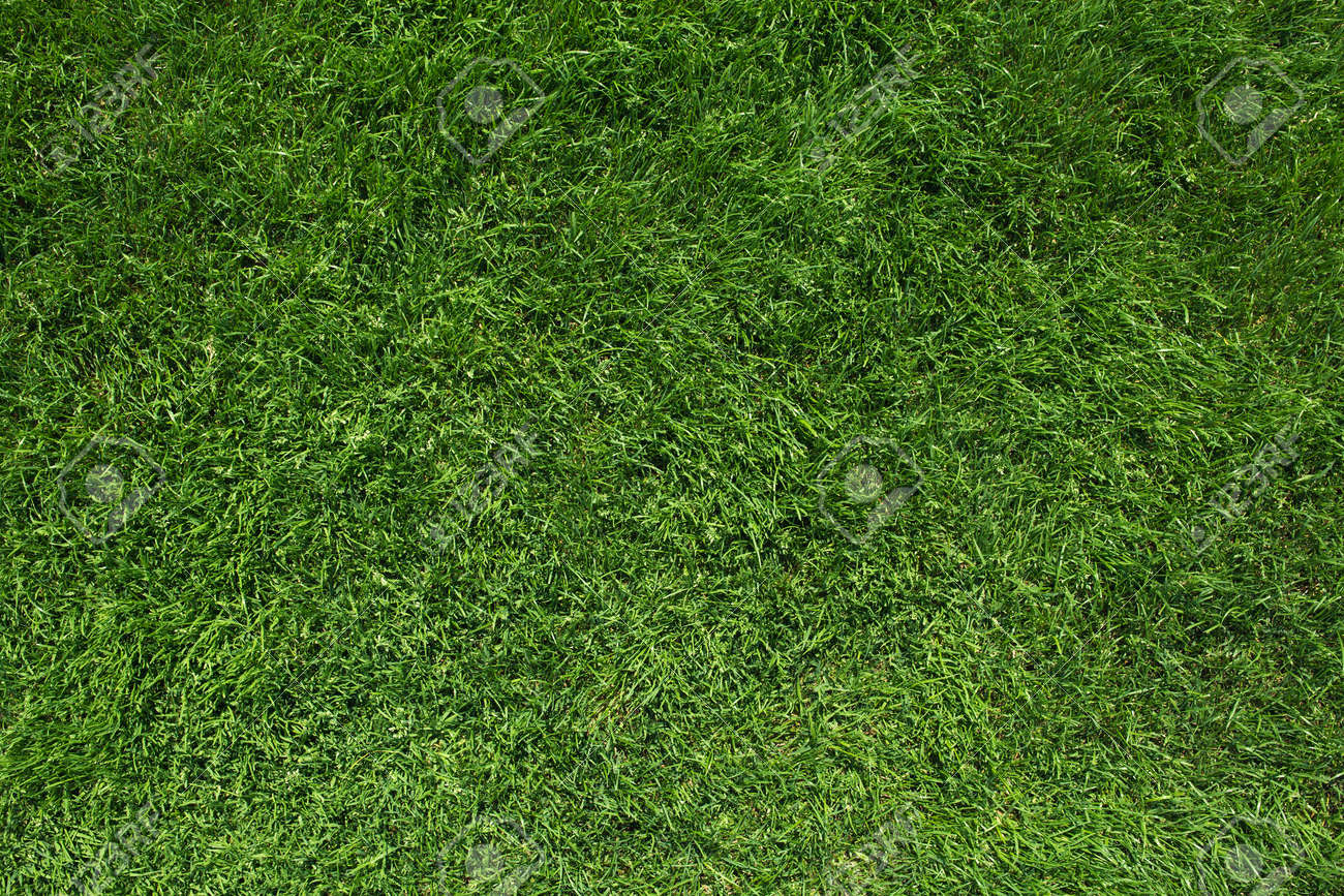 Texture of green grass top view green lawn - 60180594