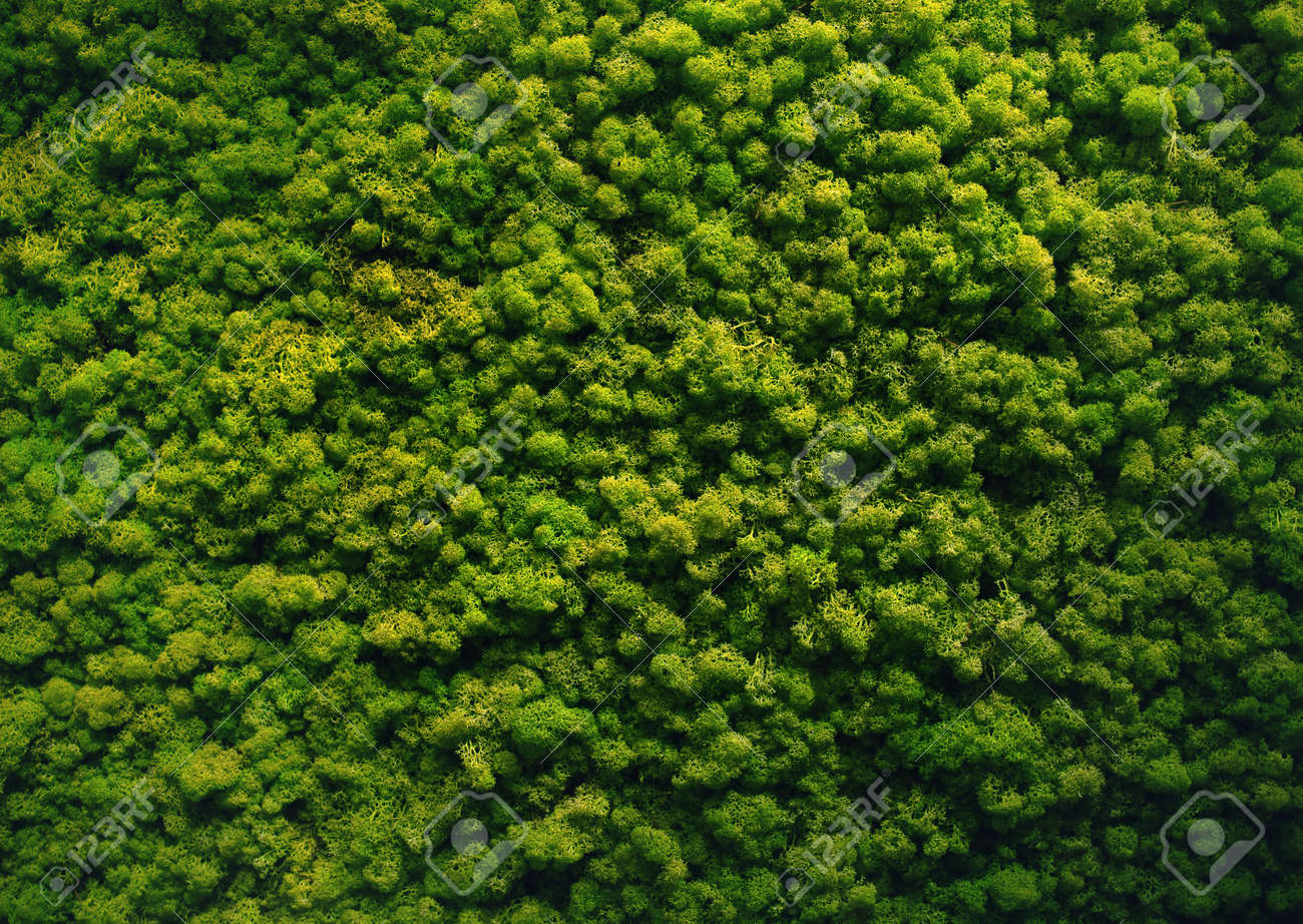 green moss background wall texture stock photo picture and royalty