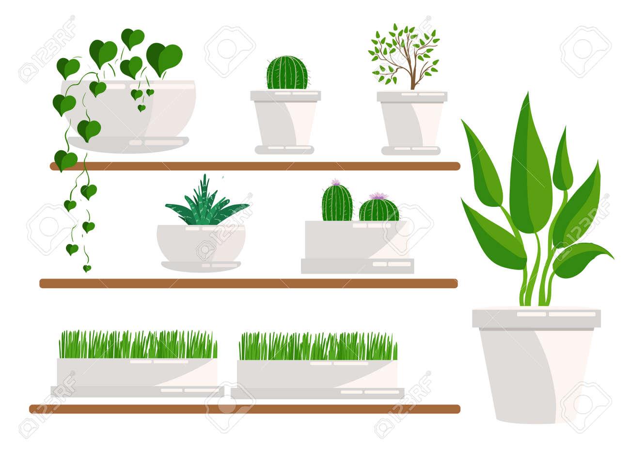 観葉植物のイラストサボテン多肉植物ホーム花鉢の観葉植物を設定
