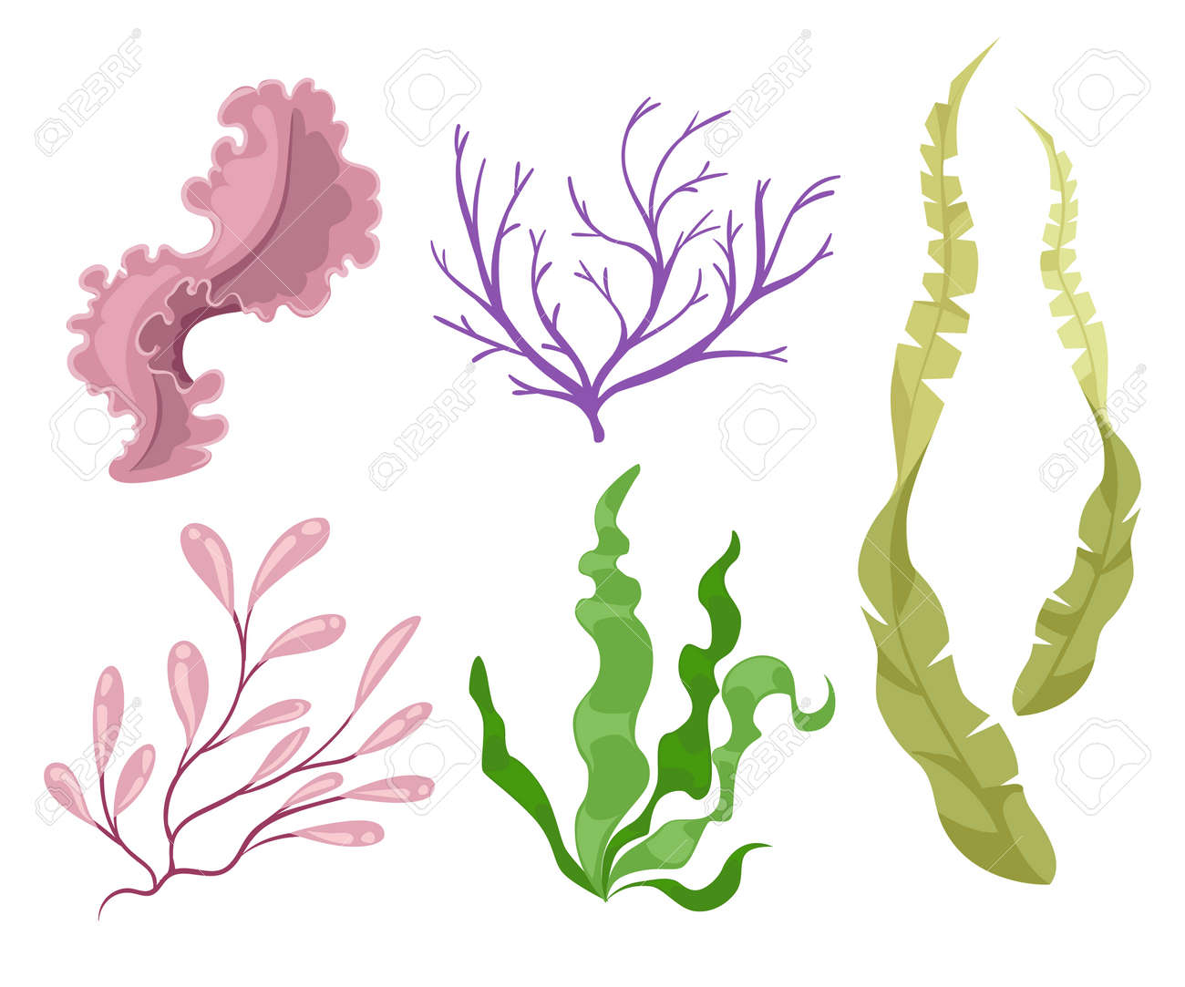 sea plants and aquatic marine algae seaweed set vector illustration rh 123rf com seaweed vector art seaweed vector images
