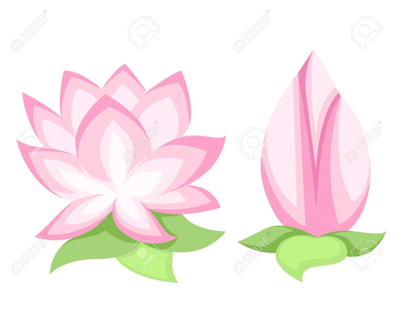 Vector Illustration Beautiful Pink Lotus Flower Isolated On