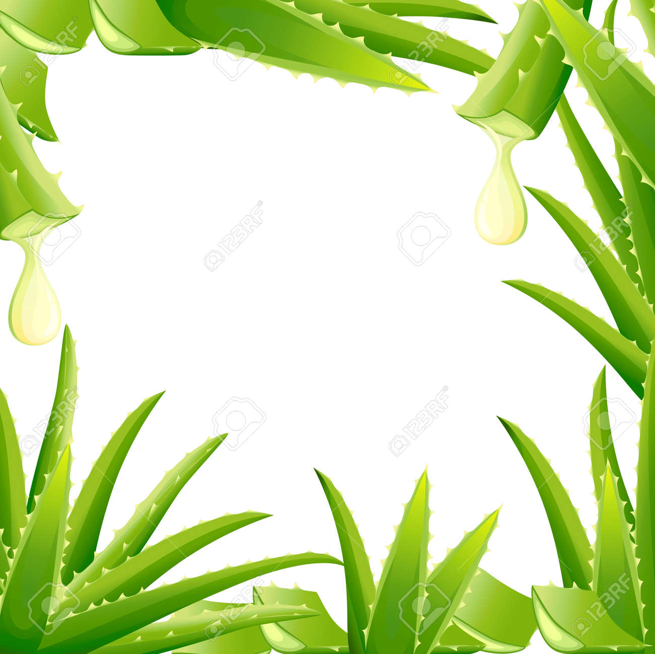pattern of green aloe vera plant cut pieces of aloe vera serum