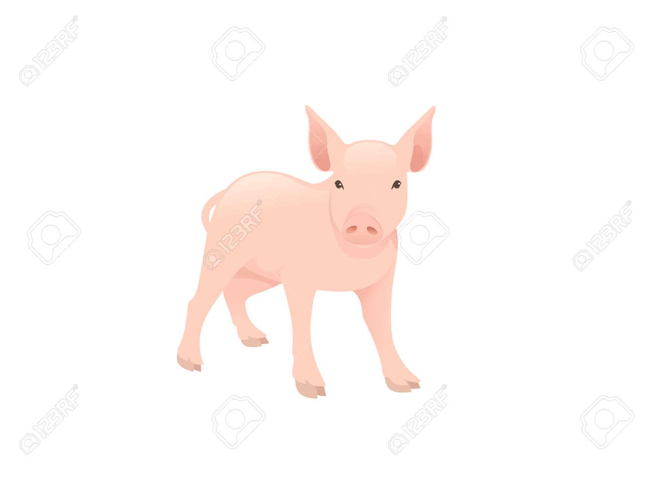 Cute adult pig farm animal cartoon animal design vector illustration isolated on white background - 168754770