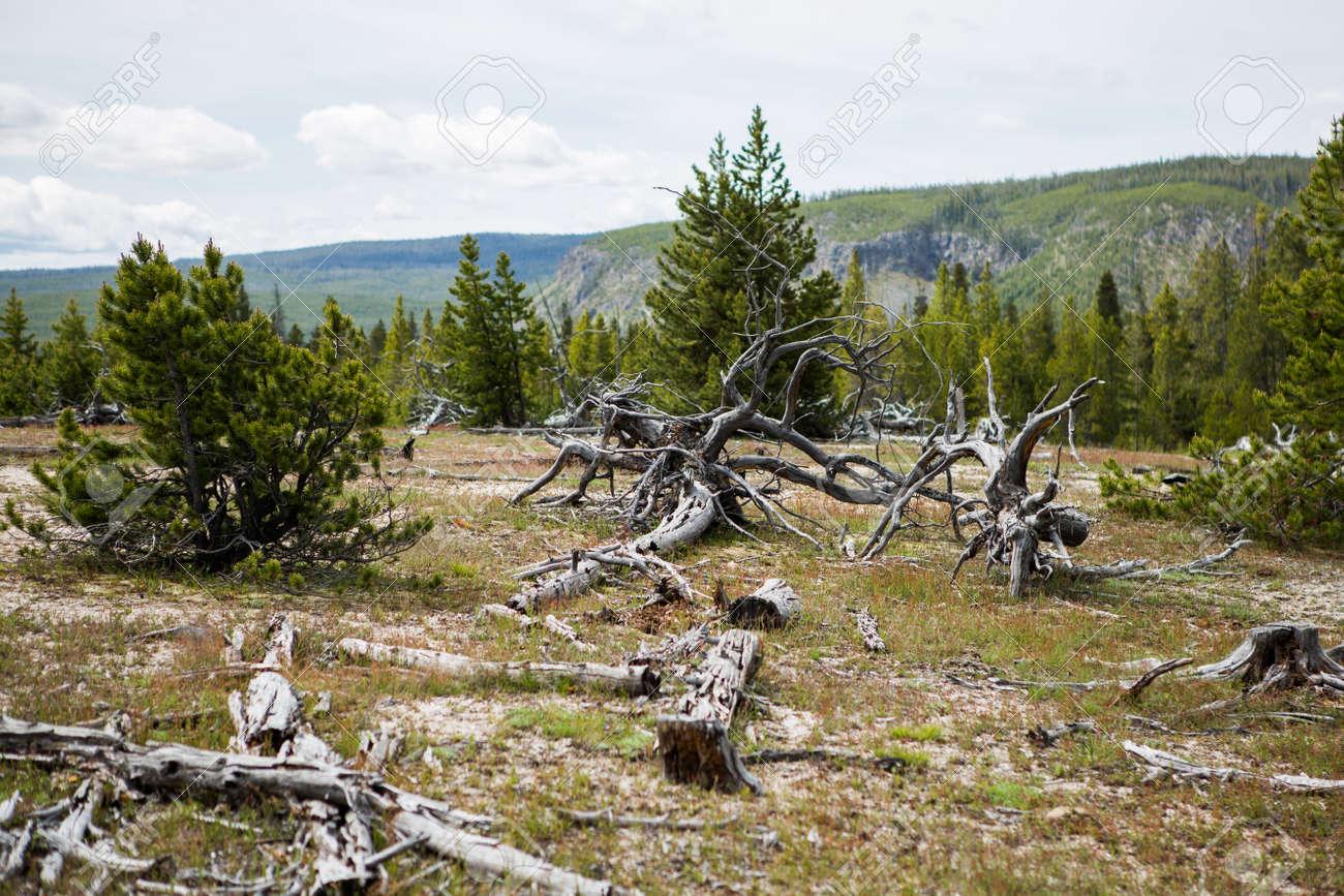 Aislado árbol Muerto Con Ninguna Hoja En Suelo Agrietado Como ...