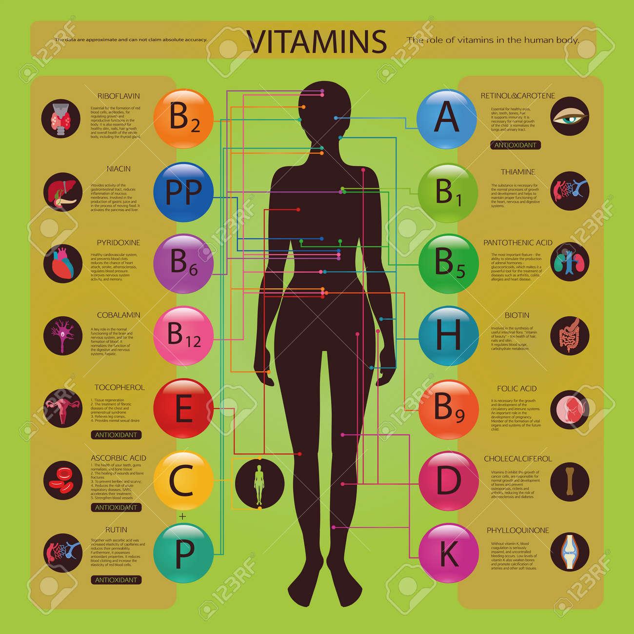 Wirkung Der Vitamine Auf Die Organe Und Systeme Des Menschlichen ...