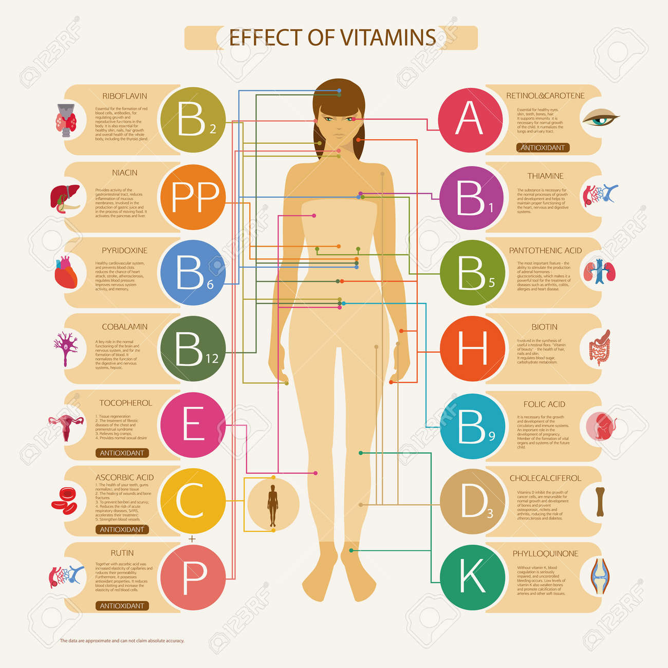 La Mayor Influencia En Los órganos Y Sistemas Del Cuerpo Humano ...