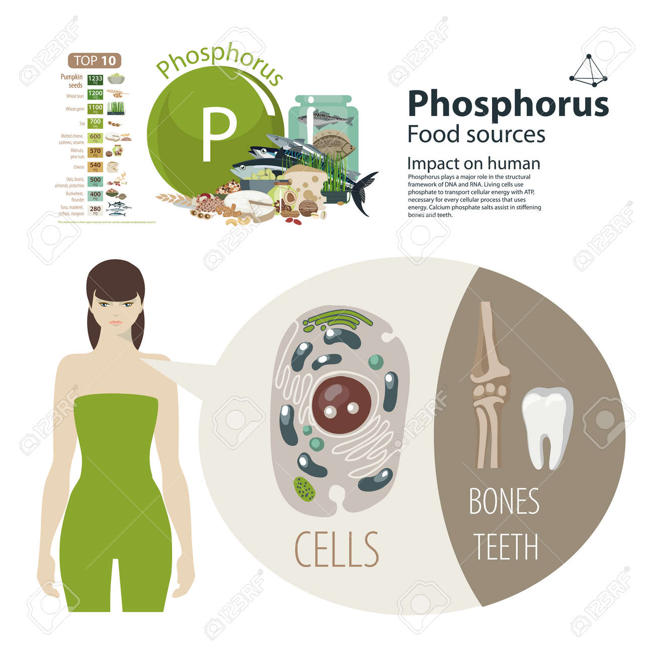 Phosphorus Food Sources For Bones And Teeth With Woman Royalty Free