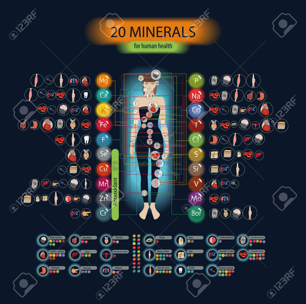 Microelements in the human body: their role and importance. Table