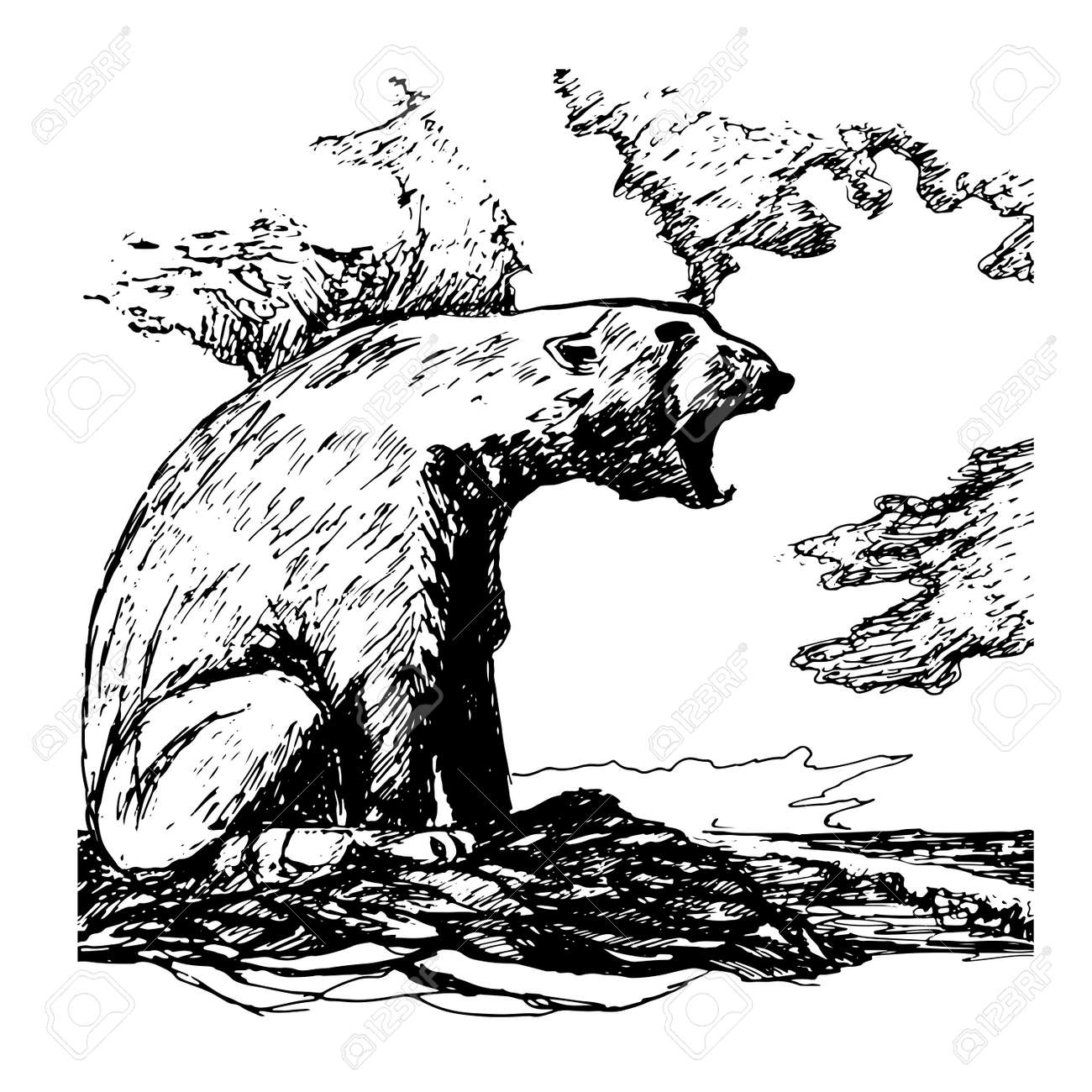 picture polar bear sketch royalty free cliparts vectors and