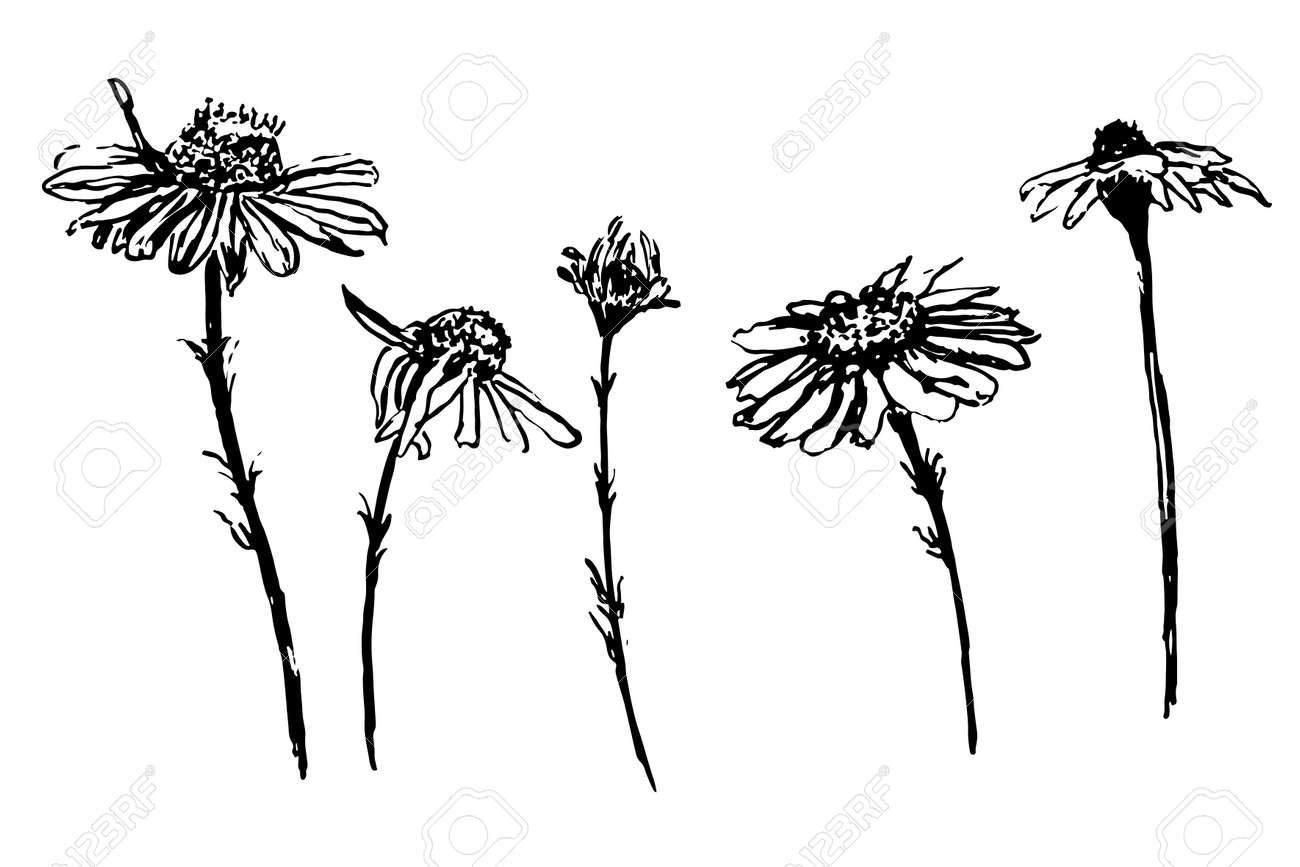 Black Line Flower Drawing : Line drawing etsy