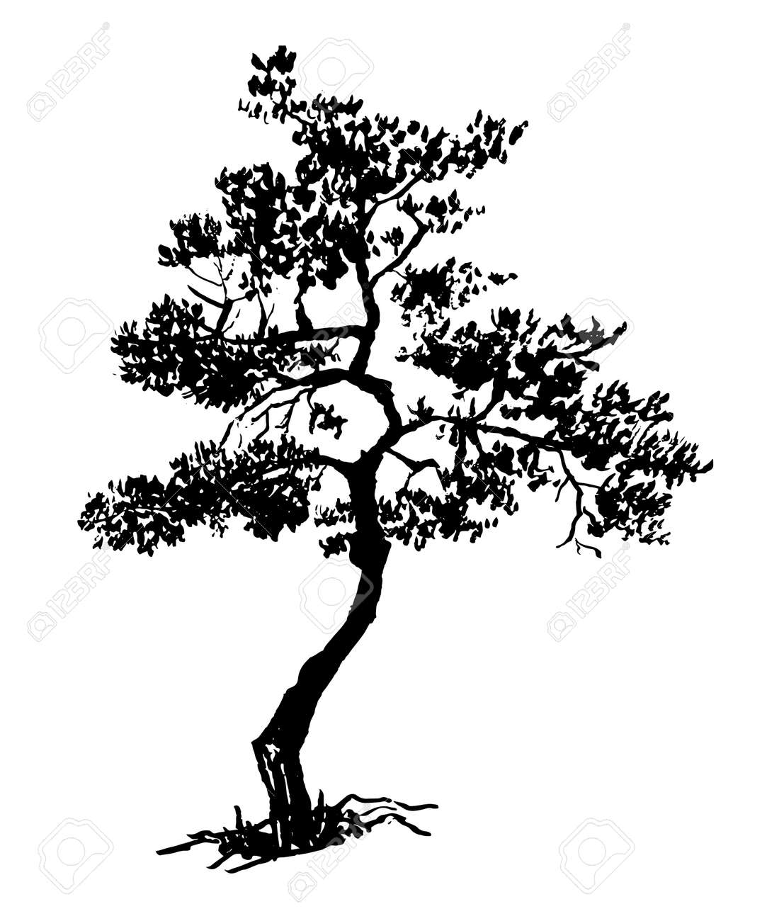 Old Dry Evergreen Tree Sketch Hand Drawn Ink Vector Illustration Royalty Free Cliparts Vectors And Stock Illustration Image 94512216
