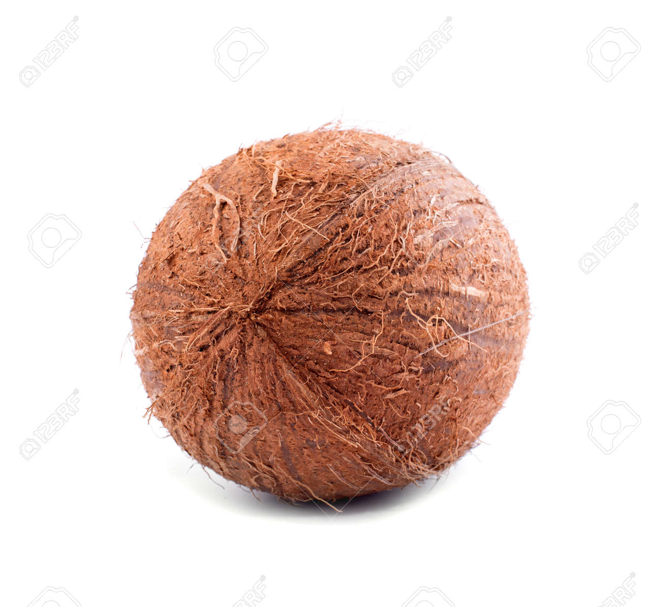 a view from behind on a whole hairy coconut isolated on a bright