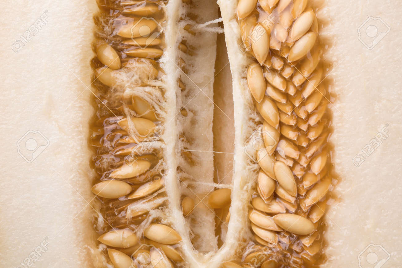 A Macro Picture Of Nutritious Cantaloupe Seeds A Fresh Juicy Stock Photo Picture And Royalty Free Image Image 83314215 These are the familiar american cantaloupes with orange flesh and a corky net on the skin. a macro picture of nutritious cantaloupe seeds a fresh juicy