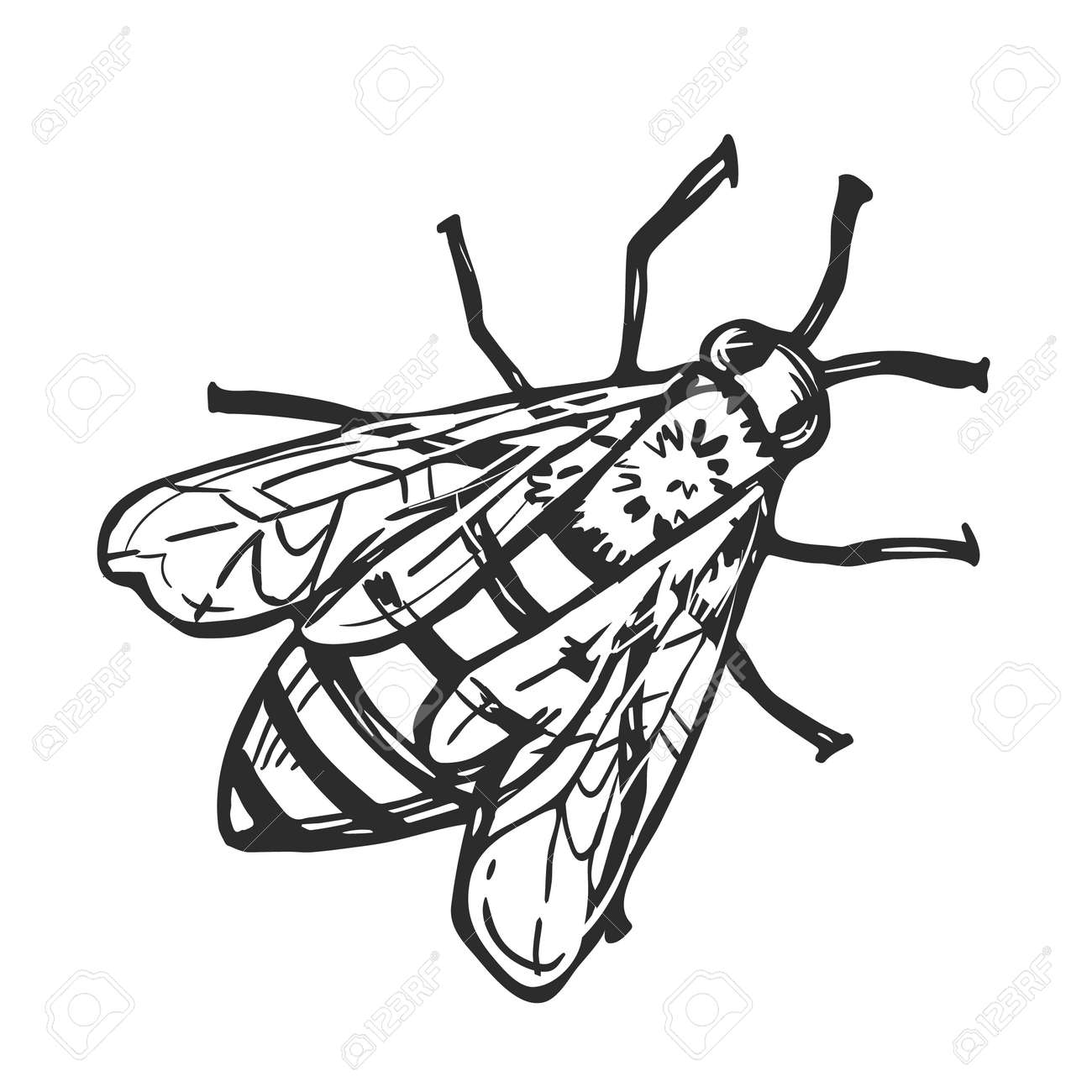 Honey bee freehand pencil drawing isolated on white background