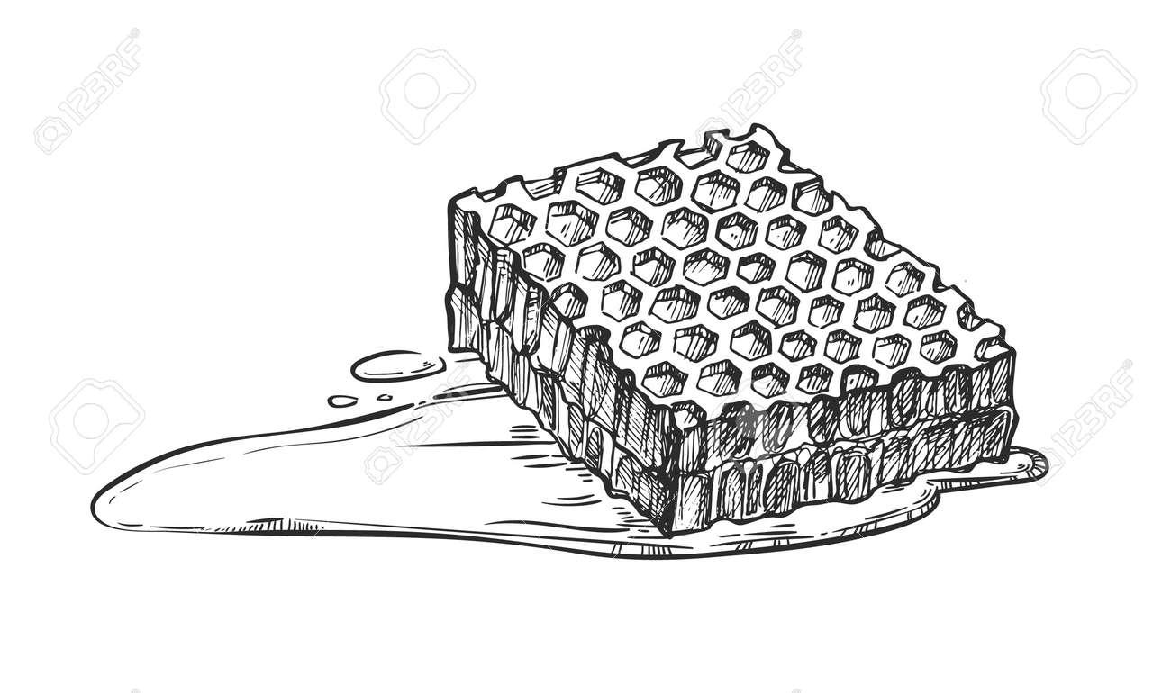 Dessin Au Crayon à Main Levée Nid Dabeille Isolé Sur Illustration Vectorielle Fond Blanc Produit De Miel Doux De Nature Organique Croquis